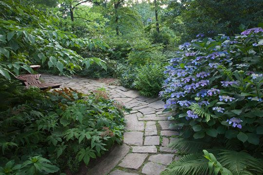 165 best images about shade gardens on pinterest gardens. Black Bedroom Furniture Sets. Home Design Ideas