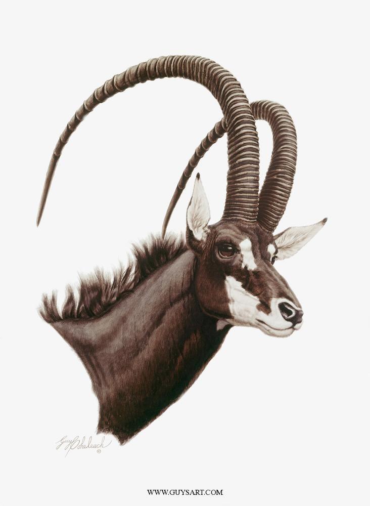 """SABLE ANTELOPE""30 X 22 -AFRICAN GAME | animals в 2019 г ..."