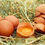 Jaja – zdrowe czy niezdrowe