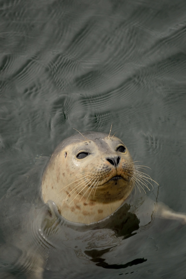 This little fella was checking out the fishing in Dartmouth, NS Not uncommon to spot porpoises, seals, and the occasional whale in the harbour, in the Arm, or on a local beach. http://www.mervedinger.com