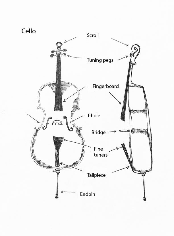 Parts Of The Cello By Tracie Noles