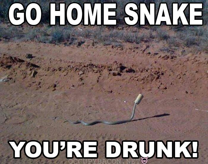 50 Best Go Home, You're Drunk Images On Pinterest