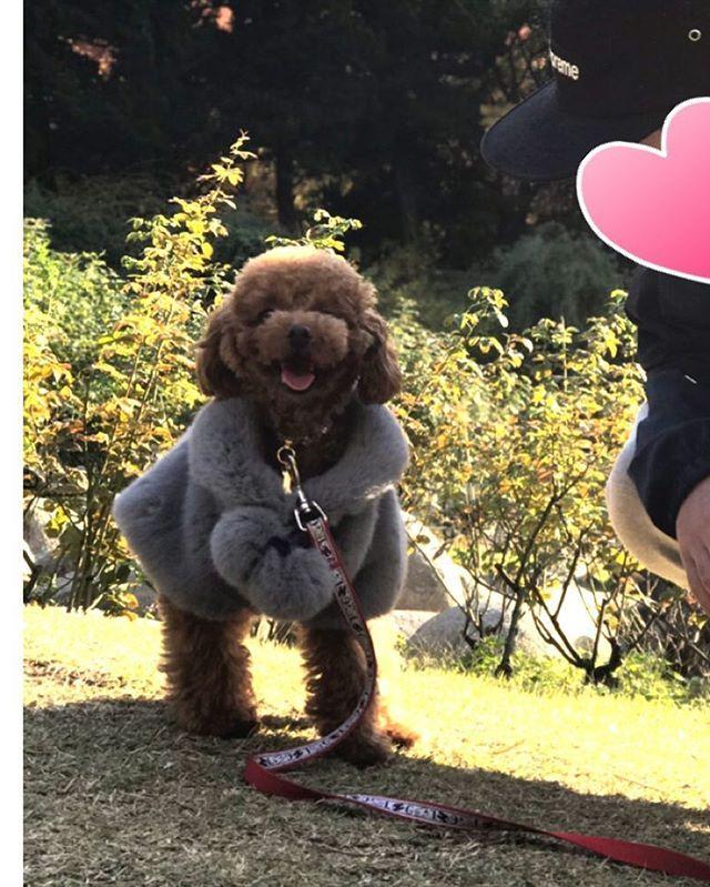 😁 . 私の一番お気に入りの📷 大好きな彼と一緒に公園に来れて とっても嬉しそうなエル☺️💓 これが満面の笑みに見えて 愛おしく思うママでした(*´ー`*) .  #トイプードル #トイプードル男の子 #トイプードルレッド #プードル #ふわもこ部 #犬のいる暮らし #親ばか部 #わんこなしでは生きていけません会  #犬のいる生活 #タイニープードル #ティーカッププードル #可愛い #愛犬 #プードル部 #犬なしでは生きていけない #犬服 #ドッグウェア #犬の洋服#トリミング  #おしゃれわんこ #おしゃれカット #いぬすたぐらむ #toypoodle  #エレdog #ファー #グラマーイズム