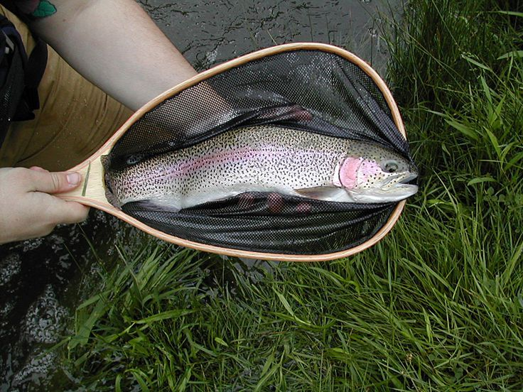 17 images about colorado fly fishing on pinterest trips for Best fly fishing in colorado