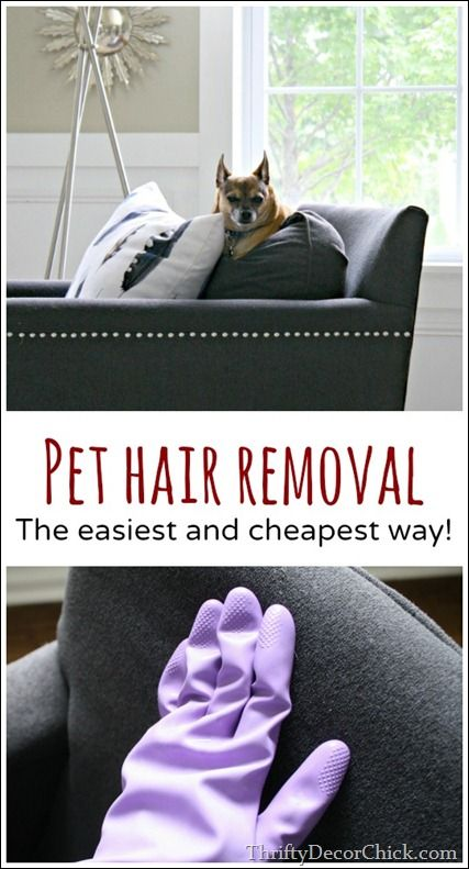 The easiest and cheapest way to remove pet hair!