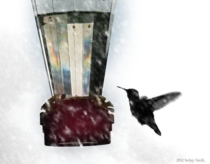 snow bird by betsy bush http://www.facebook.com/pages/Dragonfire-Graphics/210184762345120?created