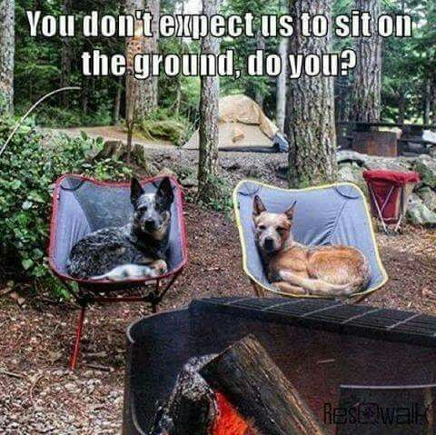 """Cattle Dogs...""""Just laying around """""""