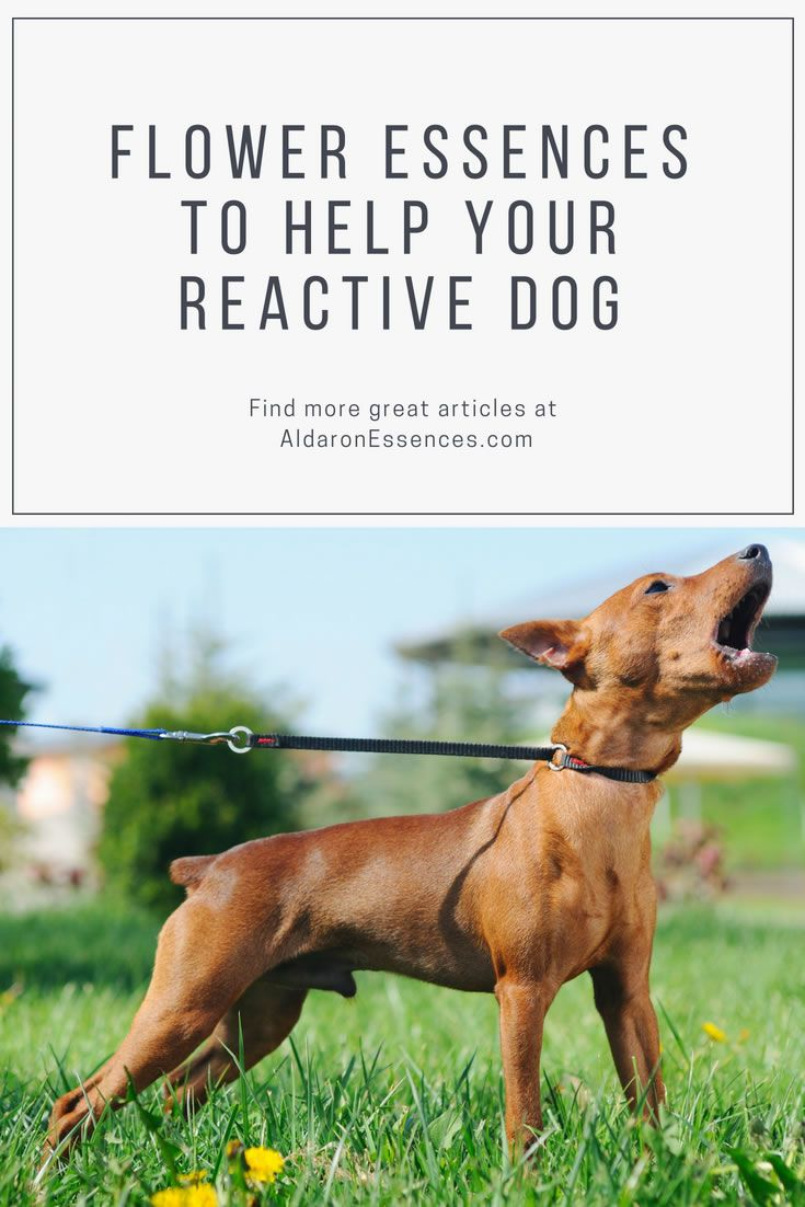 More Tools For Your Training Toolbox Bach Flowers For Dogs