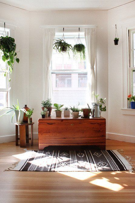 Living With White Walls: Rooms With Plants — Renters Solutions | Apartment Therapy