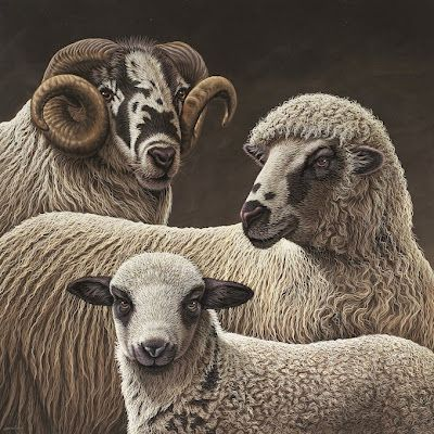 "SAVERIO POLLONI: ""04935"" - (Ovis aries) - cm90x90 - 2011"