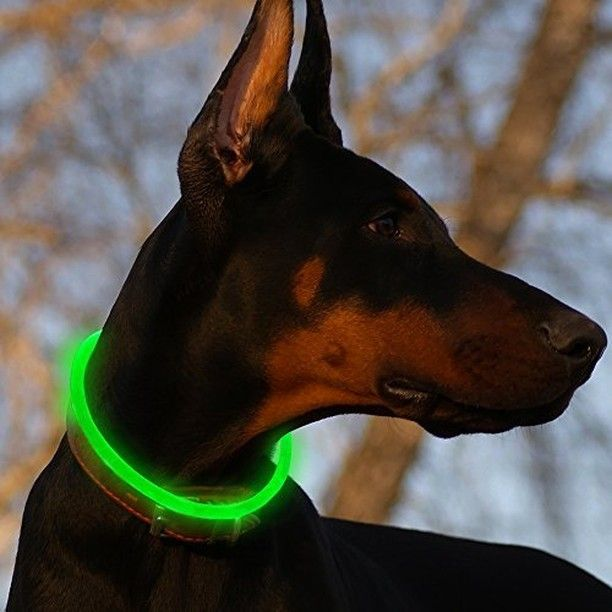 LED Dog Collar  #party #partying #fun #instaparty #instafun #instagood #bestoftheday #crazy #friend #friends #besties #guys #girls #chill #chilling #kickit #kickinit #cool #love #memories #night http://ift.tt/2BXnNf9