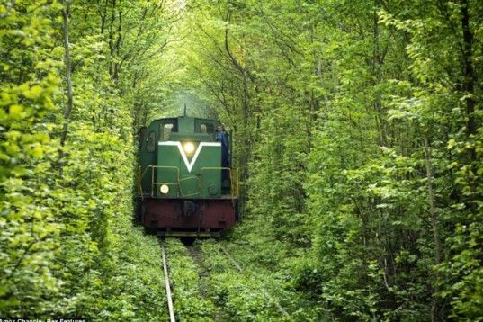 Leafy Tunnel Of Love in Ukraine