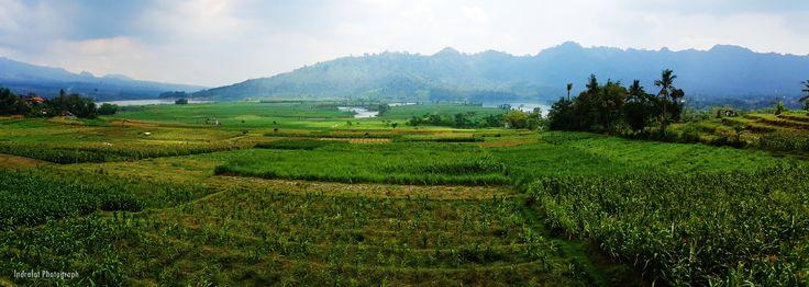 Paddy Field - Ngantang Malang