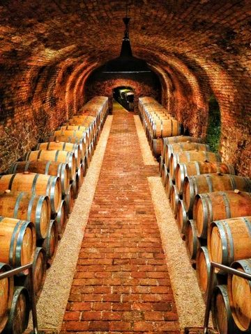 A private tour and tasting at Vienna's Wieninger Winery--this wine cellar is a converted monastery