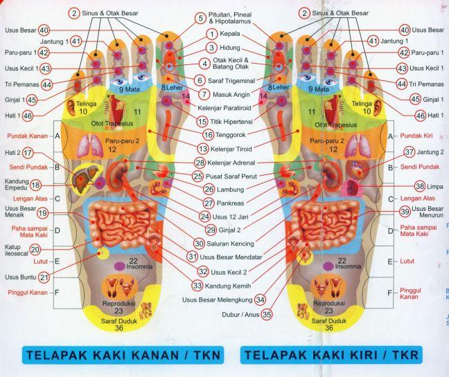 Banyak penyakit dapat disembuhkan melalui akupunktur ataupun pemijatan pada kaki. Penusukan jarum-jarum akupunktur pada titik terapi di area telapak kaki, punggung kaki, sisi dalam kaki, sisi luar …