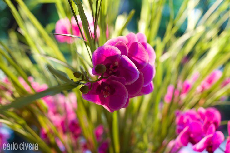 Particolare di orchidea phalaenopsis.carlocivera.org #orchideaphalaenopsis #design #arredamento