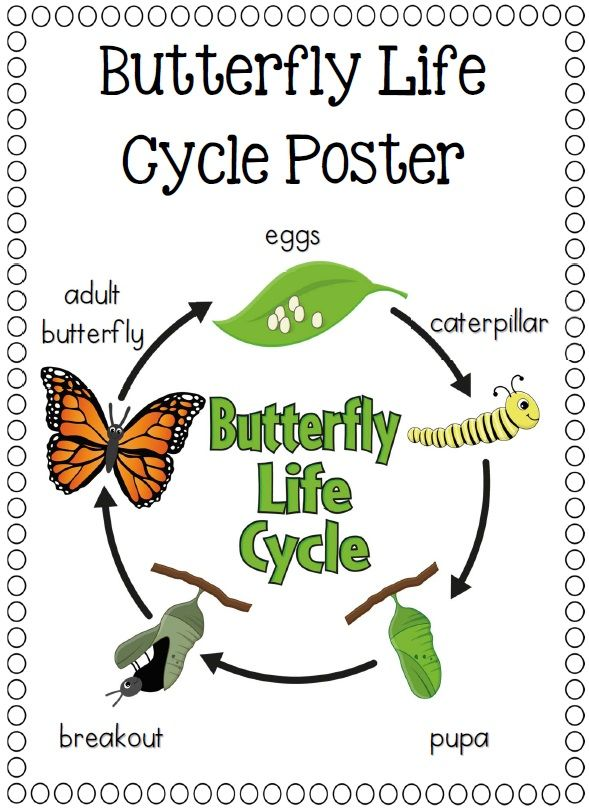 Paper Plate Life Cycles, Frog, Pumpkin, Apple, Sunflower and more$ http://www.teacherspayteachers.com/Product/Paper-Plate-Life-Cycles-Frog-Pumpkin-Apple-Sunflower-and-more-877497