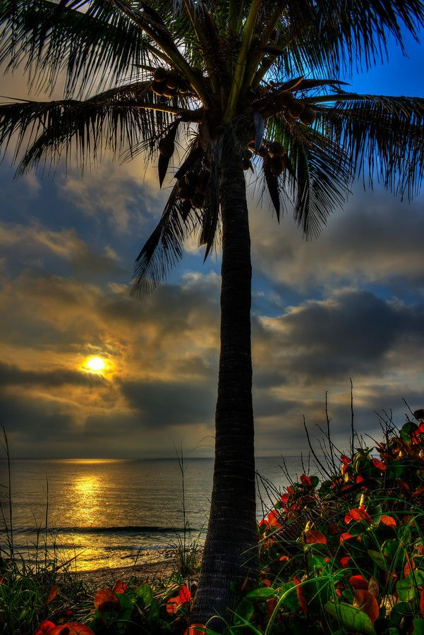 Love Surreal — wowtastic-nature:   Sunny Palm by  Steve Huskisson...