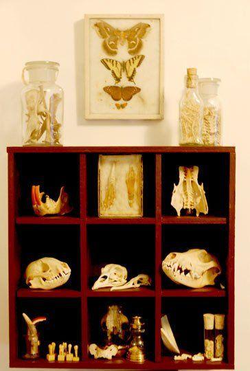 Strange History: Cabinets of Curiosities