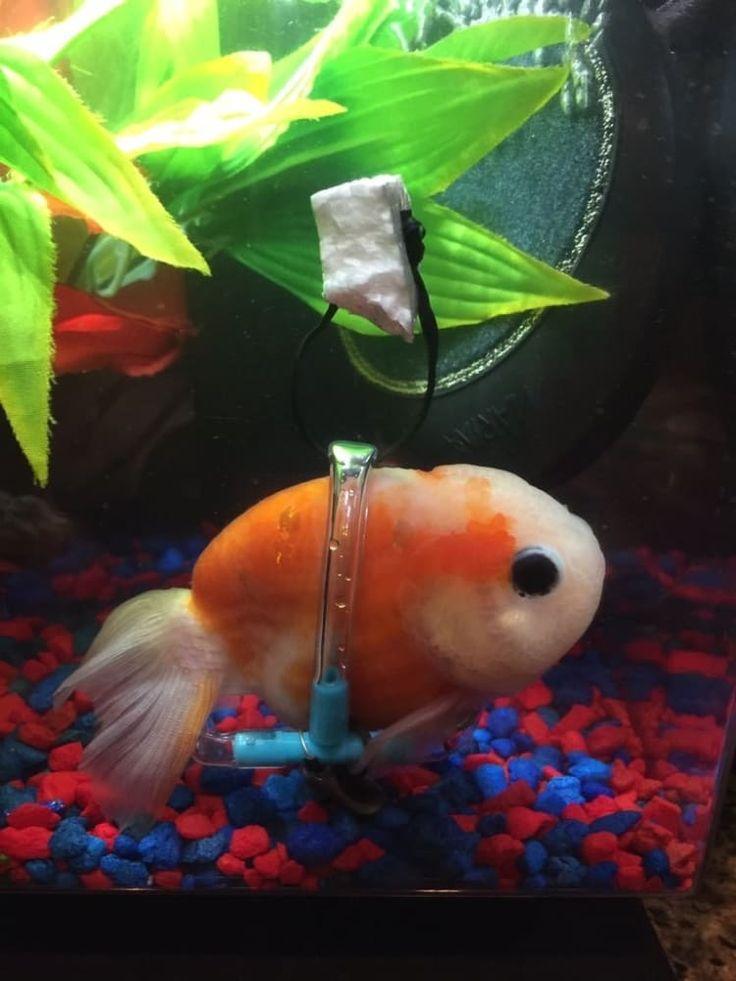 Prop Bet Fish - image 4