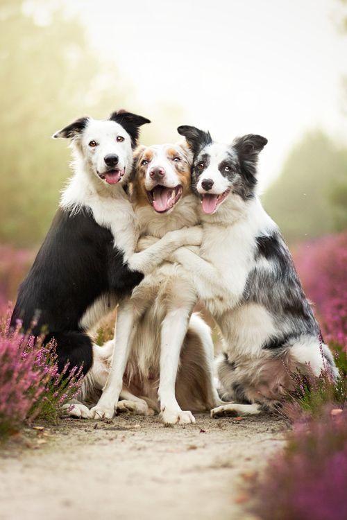 Fotógrafa de 19 años consigue captar a los perros de manera conmovedora