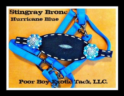 This would look great on a bay. *Black Stingray Bronc Halter, Poor Boy Exotic Tack, LLC*