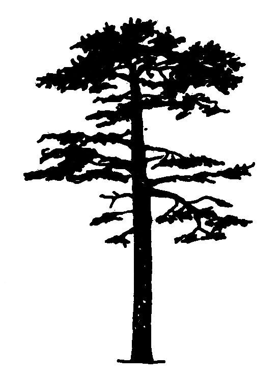 tall pine tree silhouette png - PNGDOT.COM - Free PNG Images, Cliparts, Logos