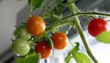 Grow a Kitchen Garden in a Window