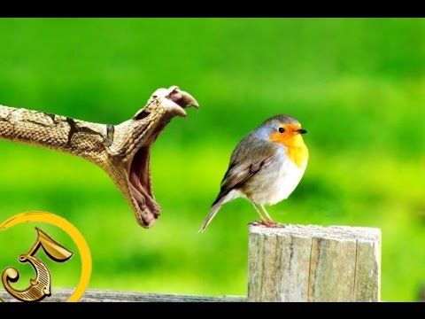 Złota Piątka: Najbardziej jadowite zwierzęta świata!