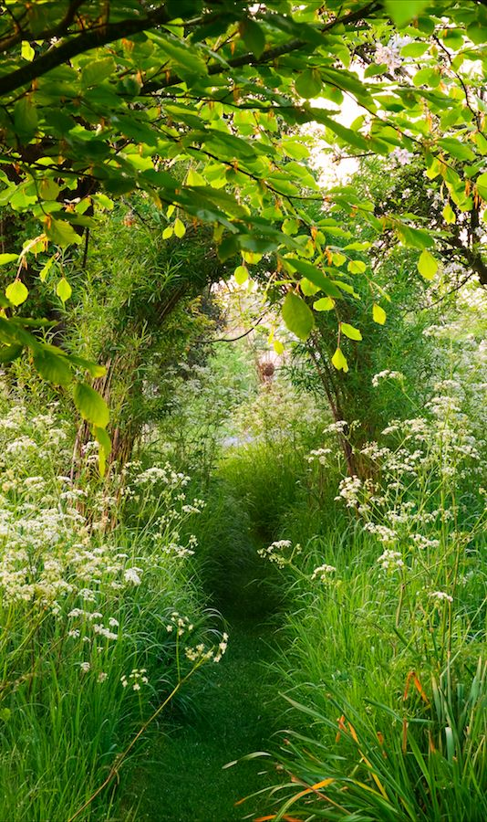 Tamed Nature Heather Edwards The Old Malthouse Wiltshire England Secret Garden A Mown Path Leads Through Sea Of Cow Parsley Anthriscus Sylvestris