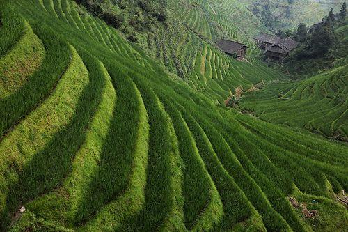 longji - 龙胜梯田 - guilin - china - 2 | hors-saison | Flickr