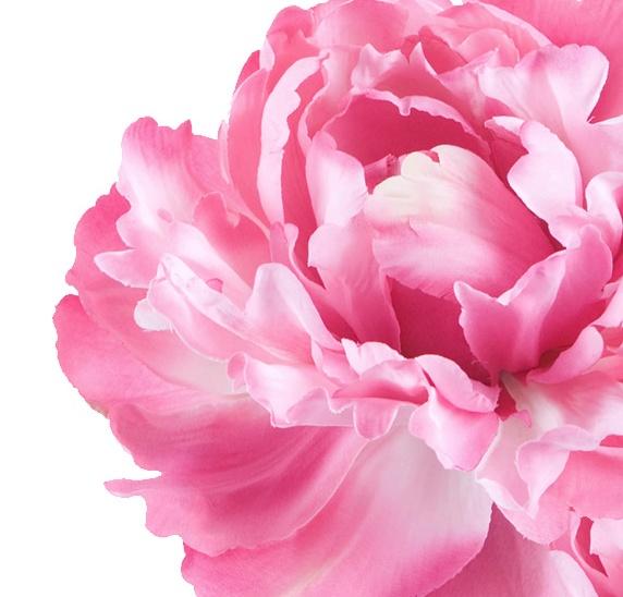 http://www.shakira-beauty.com/es/elixir#/fragancia The predominant middle notes reveal a feminine floral heart of freesia and peony, within the fruity and velvety feel of a soft apricot harmony.     Las notas predominantes nos desvelan un corazón floral femenino compuesto de notas de freesía y peonía envueltas por el aspecto afrutado y aterciopelado de un acorde de piel de albaricoque.