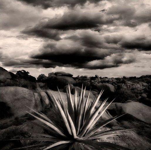 Joel Grimes Desert Life