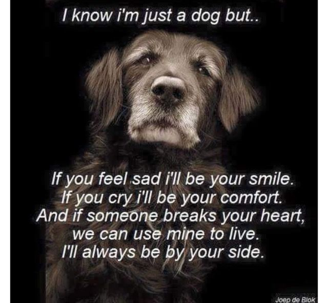 I had a Golden who stood by me with 2 miscarriages.  There was nothing like her unconditional love