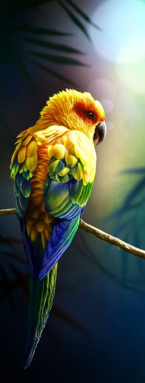 The Sun Conure Parrot ~ is a medium size brightly colored bird, native to northeastern South America. Parrots are among the most intelligent birds.