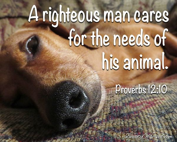 A righteous man cares for the needs of his animal.