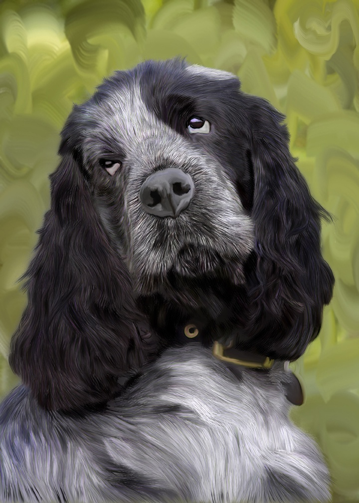 Black/Grey Cocker Spaniel - A digital Hand Painted Pet Portrait. http://www.sarahspetportraits.com/dog-portraits-gallery.html