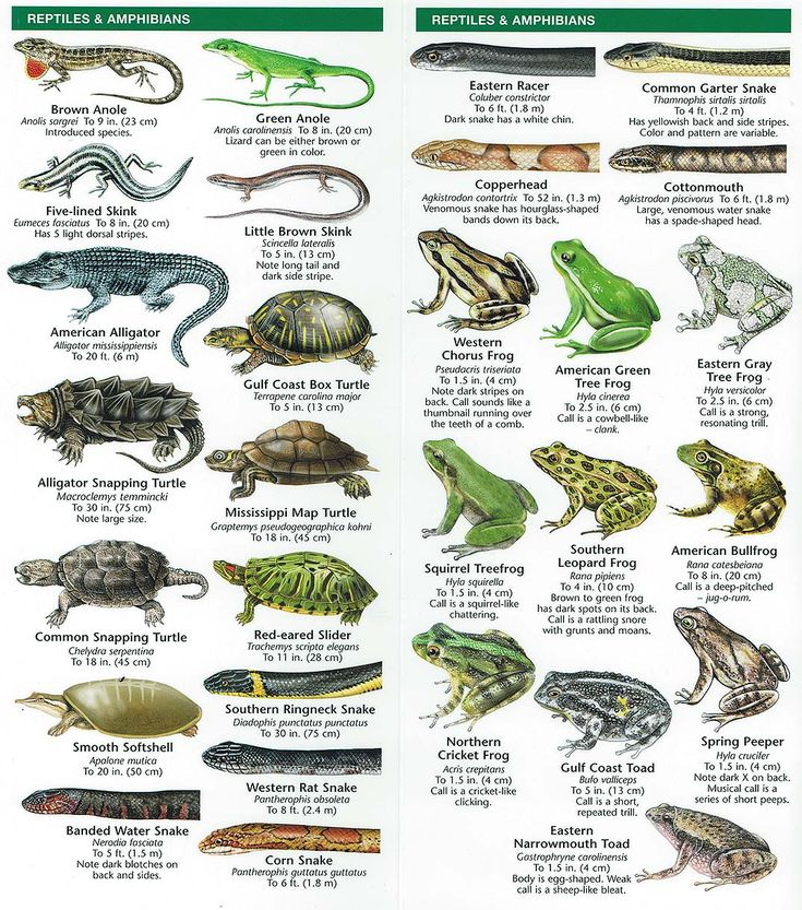 46 best Amphibians & reptiles Houston images on Pinterest ...