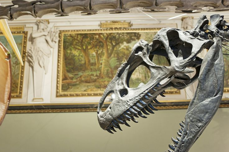 Dinosaur Hall at the Museum of Natural History Vienna