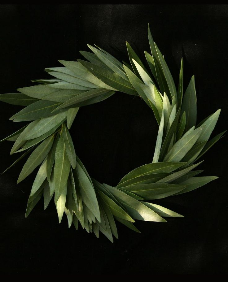 Bay Laurel Wreath