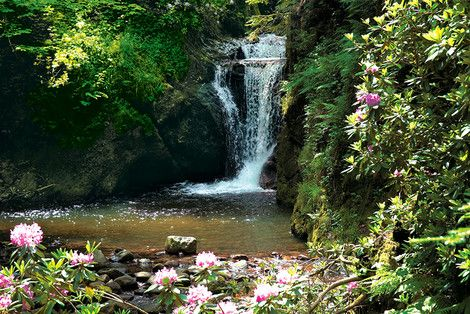 Ein beschaulicher Wanderweg zur Rhododendronblüte: Geroldsauer Wasserfall Baden-Baden, Deutschland. Nur wenige Fahrminuten entfernt vom  http://www.hotel-am-sophienpark.de/