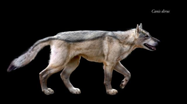 "Meet the Dire Wolf, Your Favorite ""Game of Thrones"" Canine: The Dire Wolf Was Remotely Ancestral to Modern Dogs"