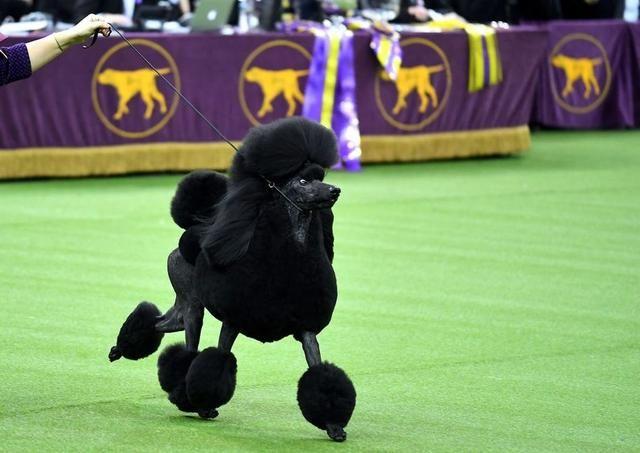 The Internet Demands Justice For Daniel The Westminster Dog
