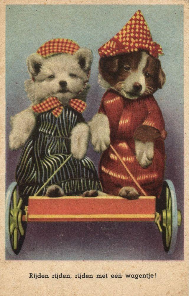 202 Best Vintage Dog Postcards All Breeds Images On