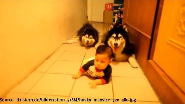 Das süßes Baby krabbelt auf allen Vieren. Diese beiden Huskies unterstützen es dabei. - BuzzerStar  Interessante Neuigkeiten aus der Welt auf BuzzerStar.com : BuzzerStar News - http://www.buzzerstar.com/das-suesses-baby-krabbelt-auf-allen-vieren-diese-beiden-huskies-unterstuetzen-es-dabei-ddaebca88.html