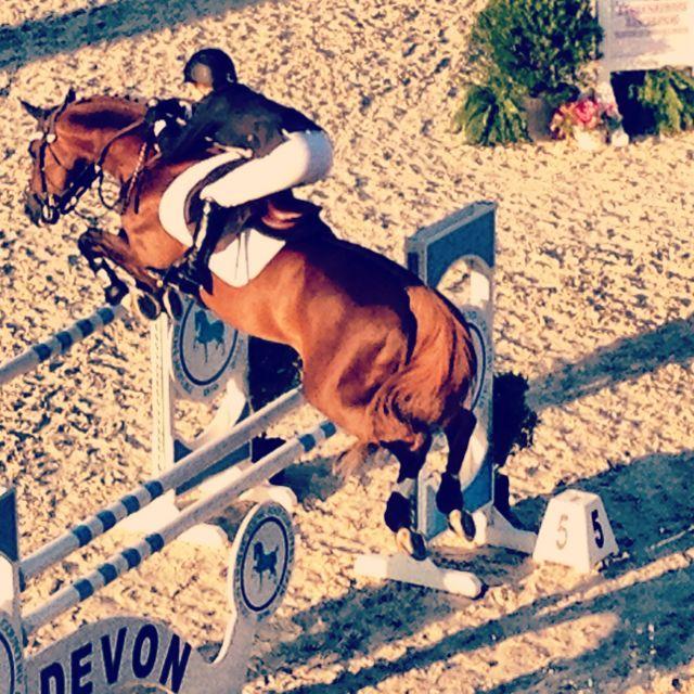 Devon Action    equestrian equine cheval pferde caballo stadium show jumping   chestnut jumper