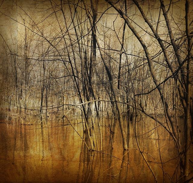 Tanglewood by IrenaS, via Flickr