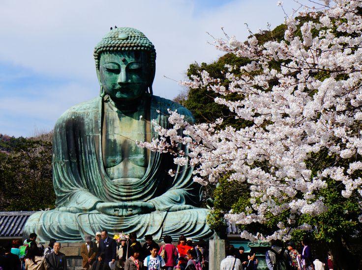 Cherry blossoms in Kamakura, Japan