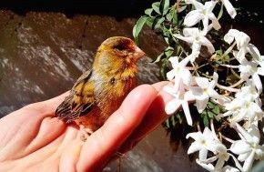 Campanha Dumond destaca aves exóticas | PETStyle®