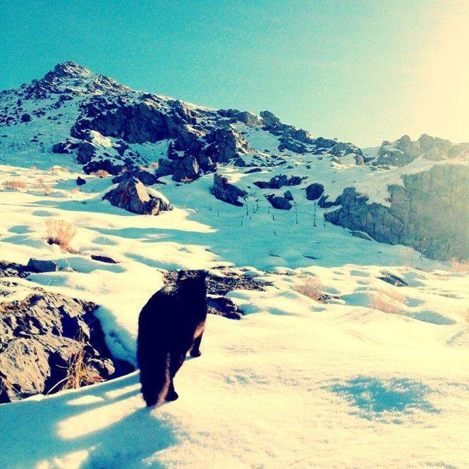 """La gatta Millie, dopo essere stata adottata dallo scalatore Craig Armstrong, ha scelto di seguirlo sulla pareti rocciose dello Utah (Stati Uniti), diventando così un'arrampicatrice provetta. """"Millie ha tutte le qualità che un buon compagno di scalate deve avere - ha dichiarato Arm"""